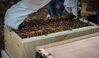 Aanschaf Eerste Bijen Imkers Nederland